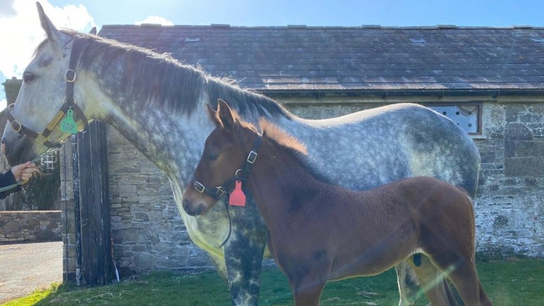 Tara Stud's Iron Dove and her Profitable filly foal