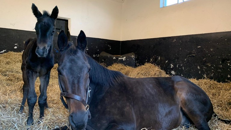 Cristina Patino's Sea The Stars colt out of the brilliant Snow Fairy, a half-brother to stakes winner and Derby hope John Leeper