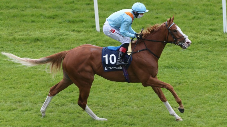 The Rosstafarian: could go well at Royal Ascot this week