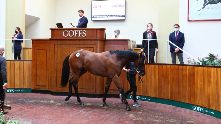 The Kingman half-brother to Miss Yoda sells for £500,000