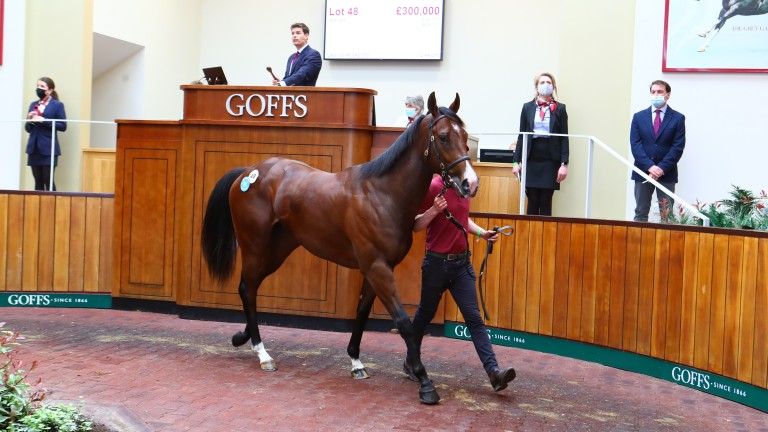 Lot 48: the No Nay Never colt bought by Alex Elliott and Jamie McCalmont for £300,000