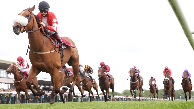 Mo Celita (noseband): bids for a sixth win in a row for trainer Adrian Nicholls