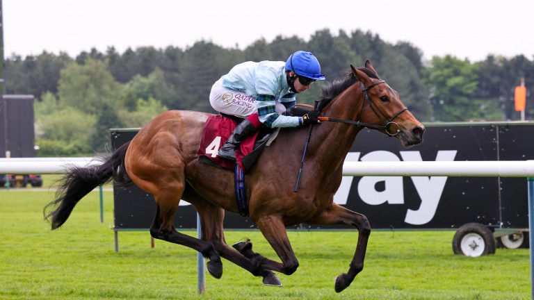 Quickthorn: will have to defy a 13lb rise for his wide-margin win at Haydock
