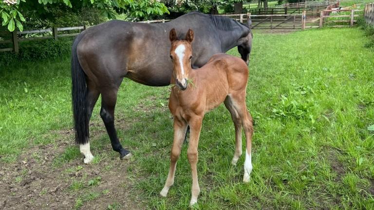 Swanbridge Bloodstock's Mukhadram colt out of Dolly Penrose