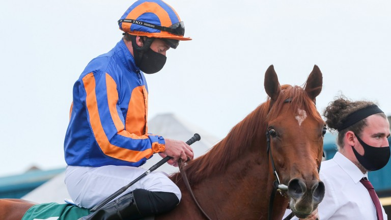 Prettiest: daughter of Dubawi and Alice Springs was fourth in the Albany at Royal Ascot