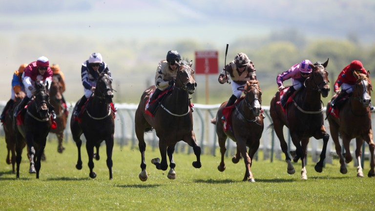 Runninwild (centre, left) shocks his Redcar rivals by winning at odds of 200-1 on Monday