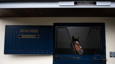 Galileo surveys the scene at Coolmore from the stable once occupied by the dual hemisphere breed shaper Danehill