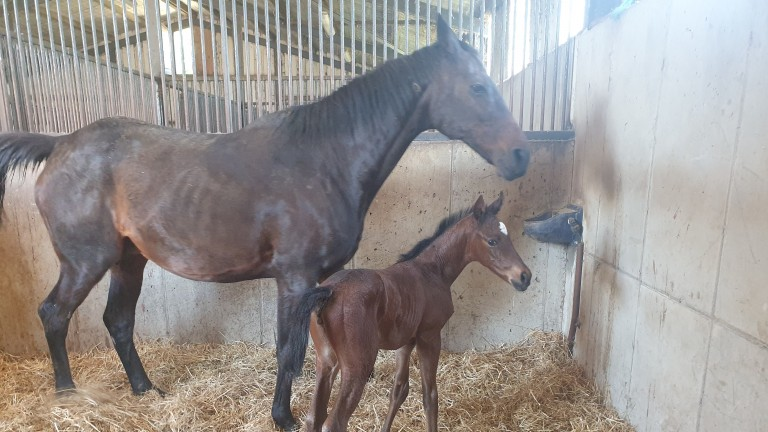 John Bowe's Maxios filly, the final foal out of the top-class Solerina