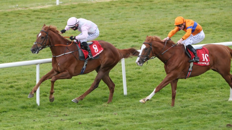 Agrimony (left): on his way to winning his maiden at Gowran Park