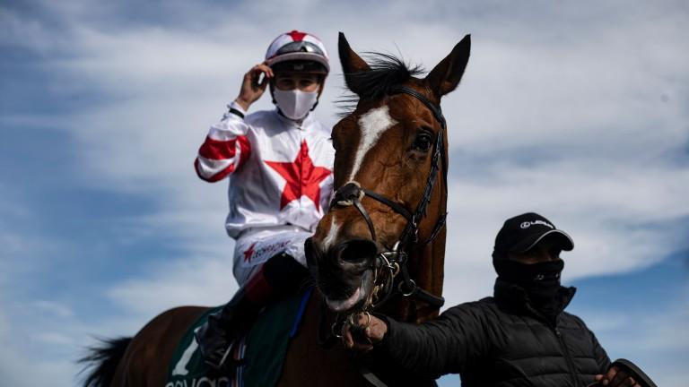 Baron Samedi: has won his last seven starts since a gelding operation