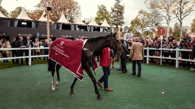 Into Faith in the winner's circle at Longchamp after the 2019 Criterium de Vente d'Octobre Arqana