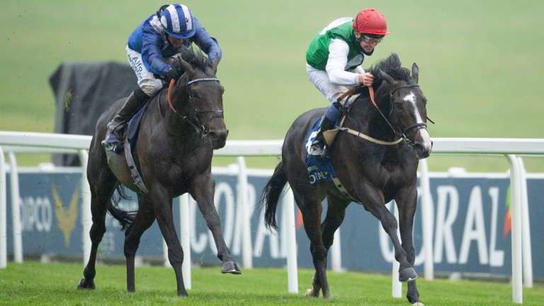 Pyledriver (right): set for a showdown with Adayar next in the King George