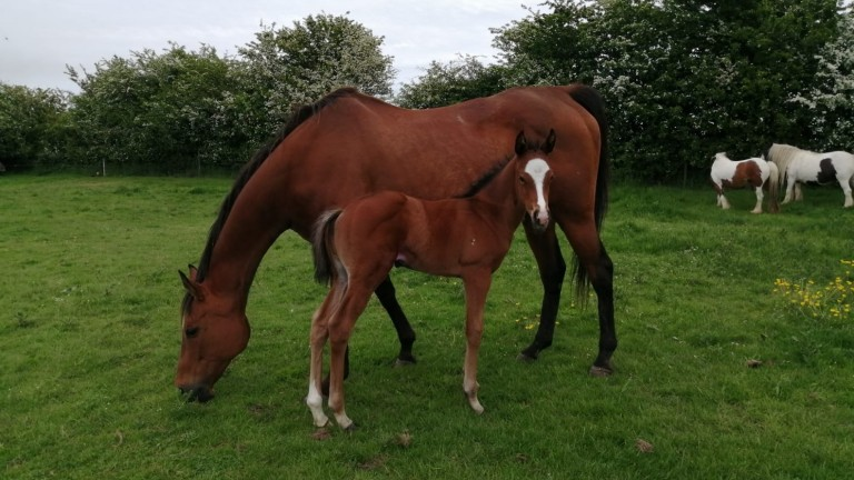 Gary Sanderson's Wusool colt out of Chantilly Jewel