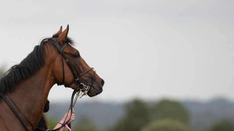 Baron Samedi: horse and connections continue to look forward