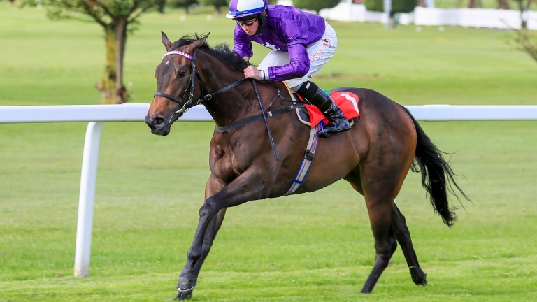 Beautiful Sunshine: the dual winner could be among Ardad's Royal Ascot runners