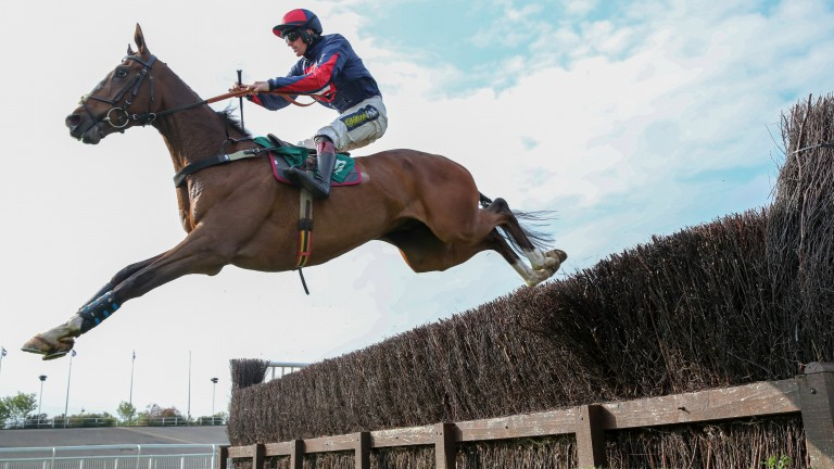 Captain Tom Cat: summer targets at Market Rasen and Galway could be in store