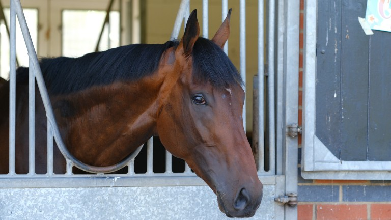 Adayar, who could have the Prix de l'Arc de Triomphe as his long-term aim, relaxing in his box at home