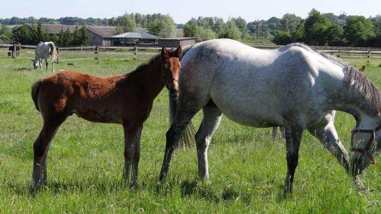 Seabhac colt out of Richter Scale 29.03.21; breeder Proxygene Bloodstock