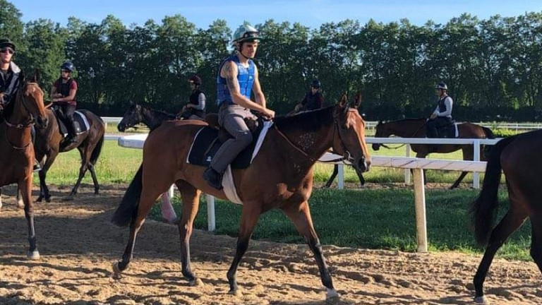 Commonwealth Cup-bound Suesa at Francois Rohaut's training base in Pau