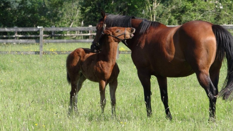 Filly by Jimmy Two Times out of Majuli 16.04.21; breeder Victoria Ward