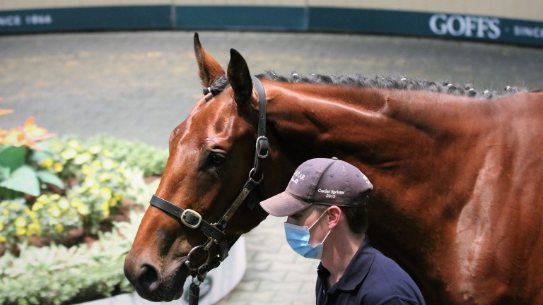 The brother to Airlie Beach who topped Tuesday's session at €230,000