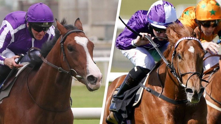 Point Lonsdale (left) and Forca Brasil: well fancied in next week's Ascot two-year-old races