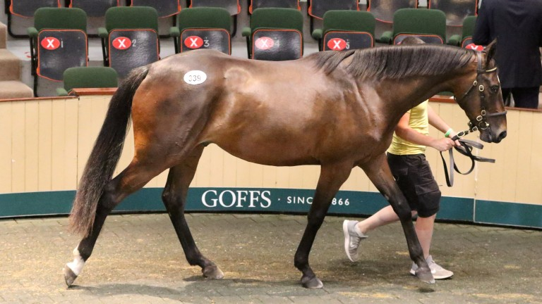 The Milan gelding out of Beautiful War who was purchased for €165,000 by Tom Malone