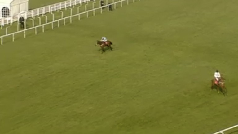 Geraghty can't get What's The Scoop to alter his course, and he heads to the grandstand