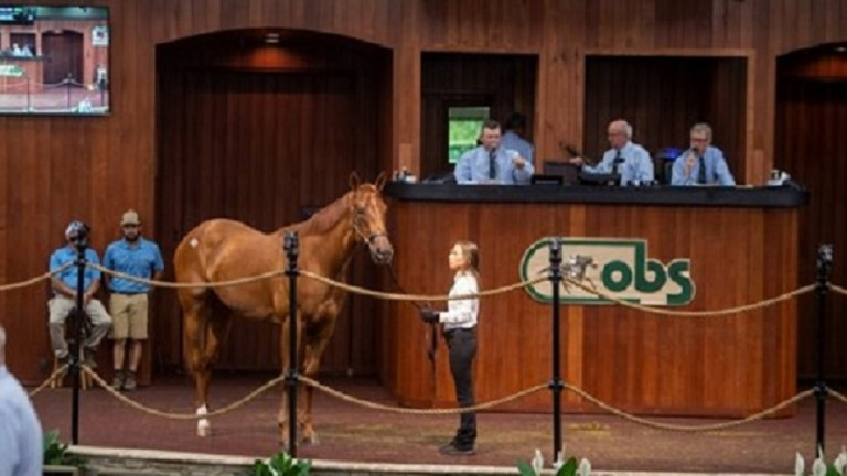 The session-topping Practical Joke filly who sold for $425,000