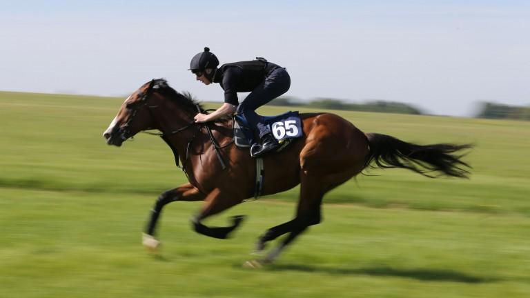 Lot 165: the record-breaking Tattersalls Ireland Goresbridge Breeze-Up Sale top lot gallops up the Rowley Mile