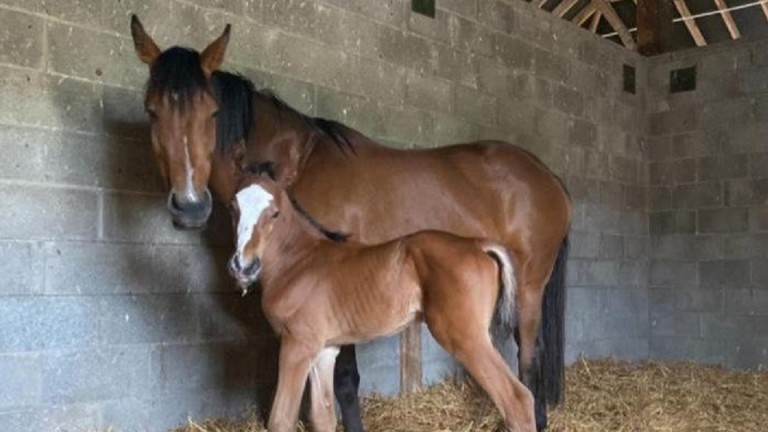 Thanks to Maggie McKenna for this picture of a colt foal by Walk In The Park out of Myztique
