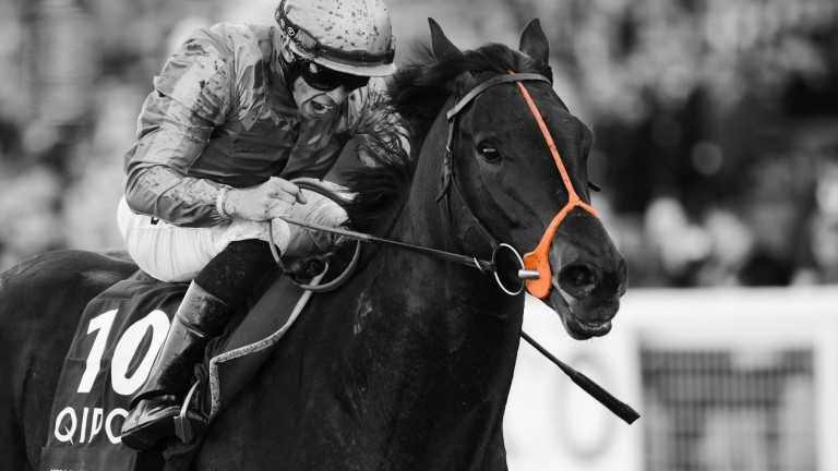 King Of Change: career rather cut short on track but still had a Group 1 to show for it
