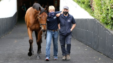 Lot 458: Thursday's session-topping Blue Bresil filly emerges from the Goffs ring after selling for €65,000