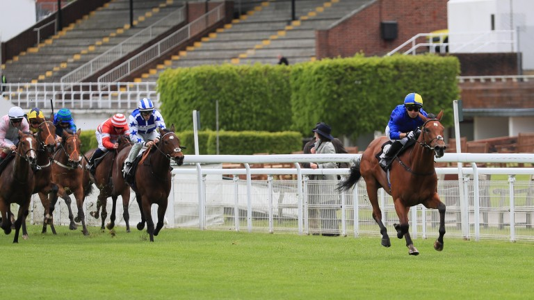 Flotus: Albany fancy made an impressive winning debut at Goodwood