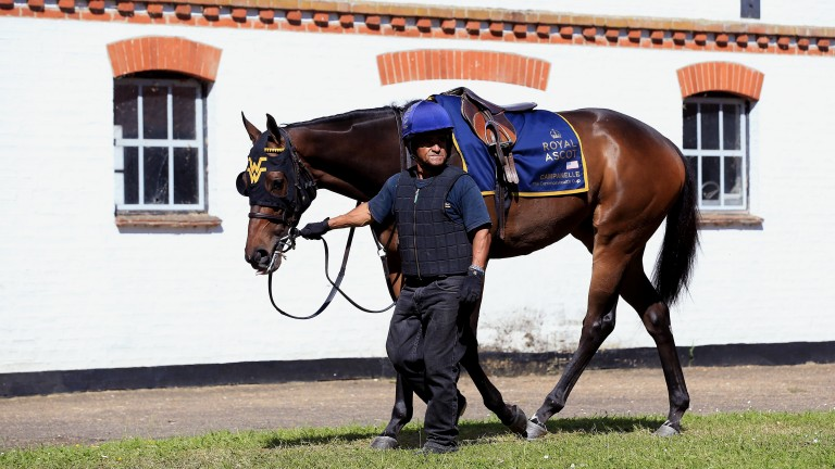 Campanelle returns to Royal Ascot after winning at the meeting last year