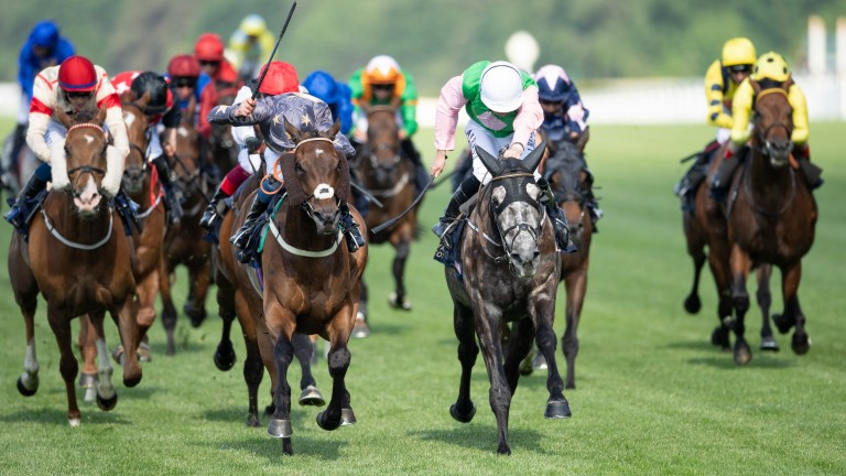 Reshoun (silver and stars) digs deep to win the Ascot Stakes