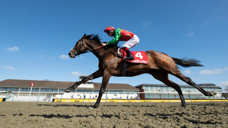 Diligent Harry: bids for a fourth career victory in Saturday's Group 3 Chipchase Stakes