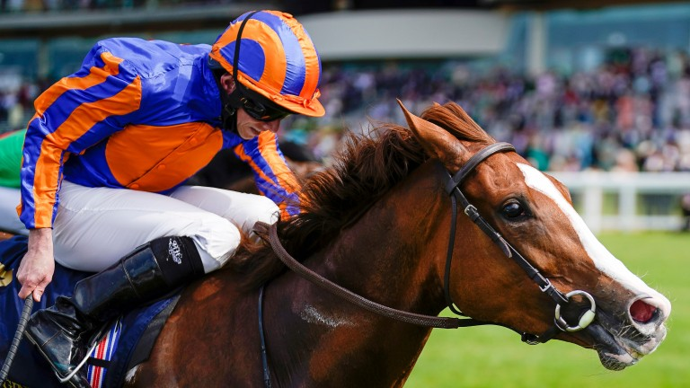 Love: returned with a gutsy win in the Prince of Wales's Stakes