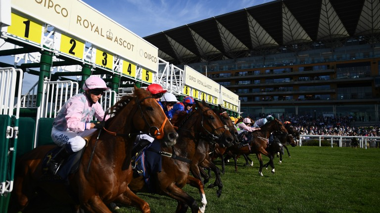 ASCOT, ENGLAND - JUNE 15: Runenrs make their way out of the stalls at the start of the Copper Horse Stakes on Day One of the Royol Ascot Meeting at Ascot Racecourse on June 15, 2021 in Ascot, England. A total of twelve thousand racegoers made up of Owners