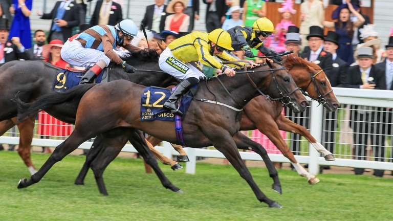 Perfect Power (12): takes Norfolk Stakes honours for the red-hot Ardad