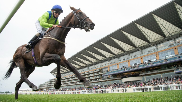 Subjectivist and Joe Fanning come home clear in the Gold Cup