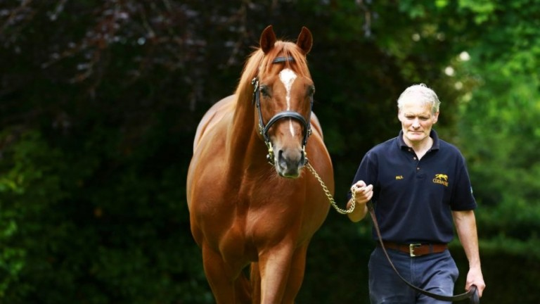 Australia: sire of 29 stakes performers