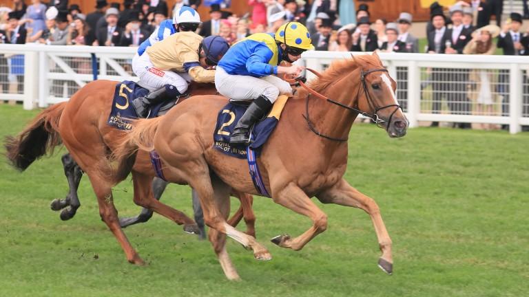 Glen Shiel (dark blue cap) ran another gallant race in defeat behind the winner