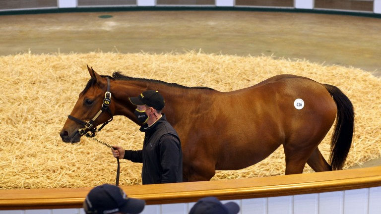 Top lot: the Galileo filly out of Shastye sells to MV Magnier for 3,400,000gns