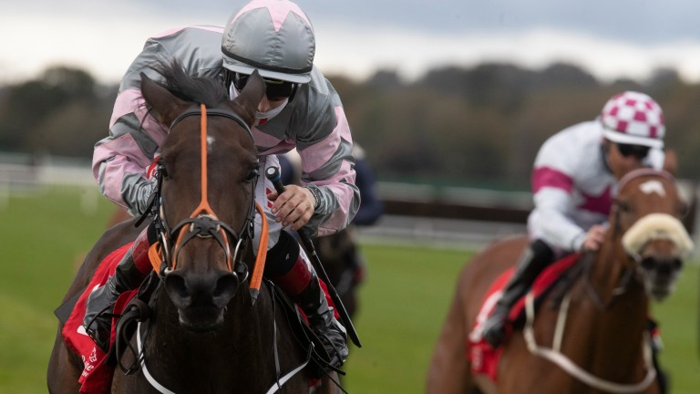 Starlight Dream: useful four-year-old must give weight to all rivals at Ballinrobe on Monday