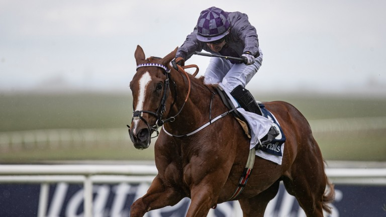 Mac Swiney: could be in line for another big Classic win at the Curragh