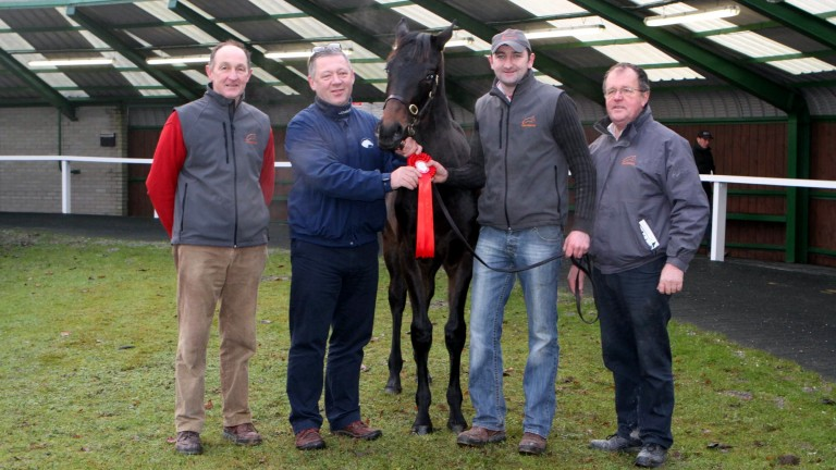 Yellowford Farm's Paul Motherway (second right) will present Hurricane Fly's three-parts brother at the Tattersalls Ireland Derby Sale