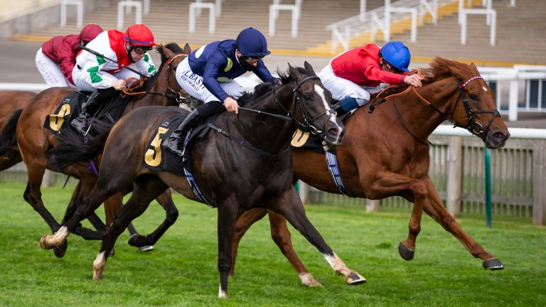 Ametist (far side): bids to win at Newmarket on Thursday
