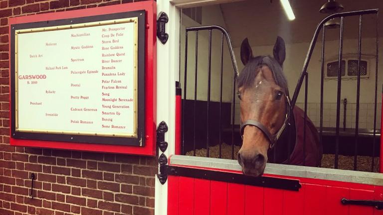 Garswood looks over his stable door at Cheveley Park Stud