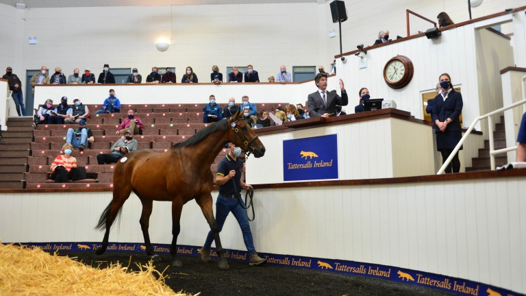 Yellowford Farm's Walk In The Park half-brother to Hurricane Fly sells for €200,000